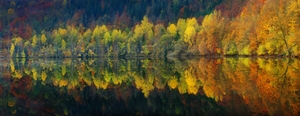 Picture of Autumnal silence