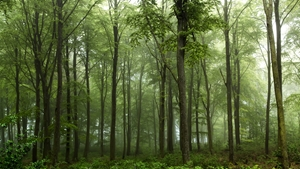 Picture of Forest...