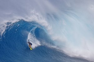 Picture of Surfing Jaws