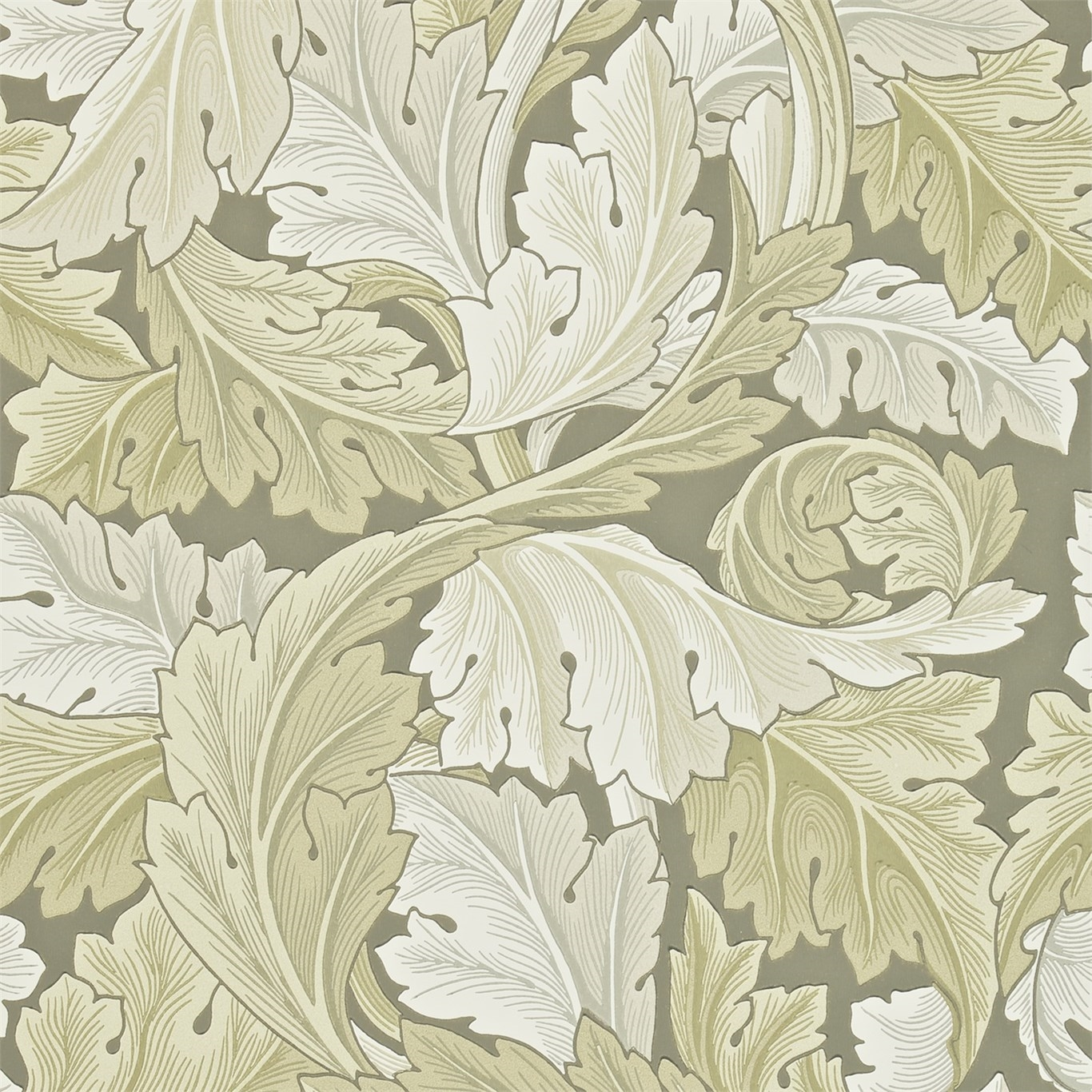 Picture of Acanthus - 212552